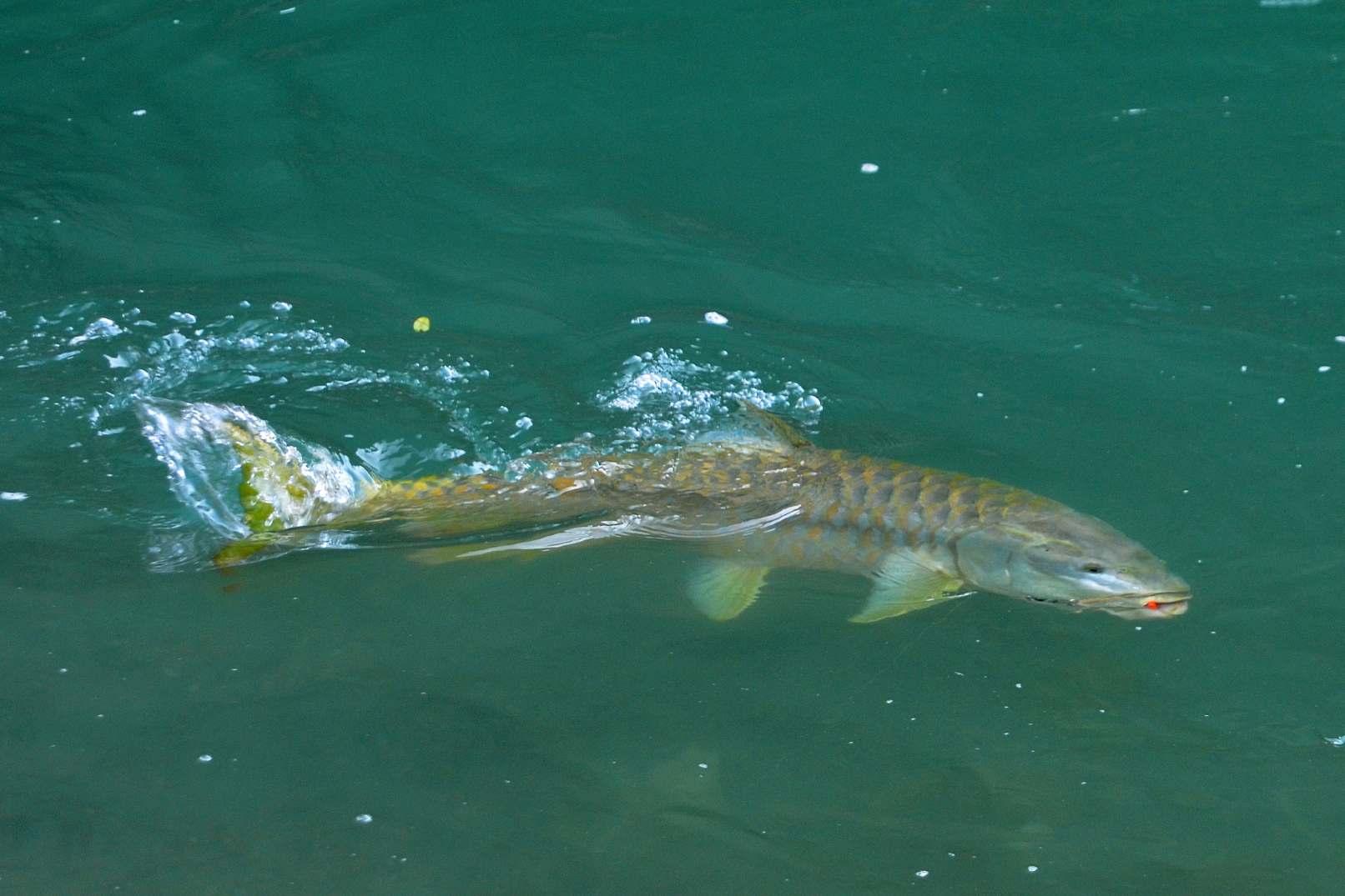 Budhigandaki River Fishing